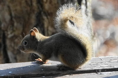 20151030squirrel2.JPG