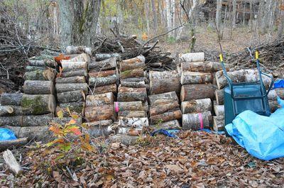 20121031woods.jpg