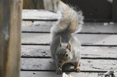 20160520squirrel1.jpg