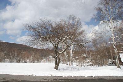 20110428shirakaba1.jpg