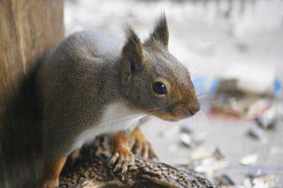 20131125squirrel1.jpg