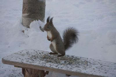 20160123squirrel.jpg