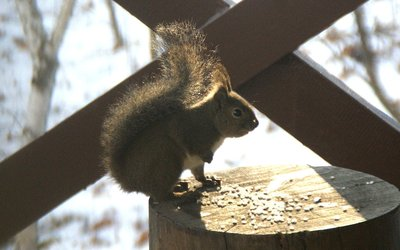 20101223squirrel.jpg