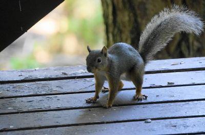 20150824squirrel.jpg