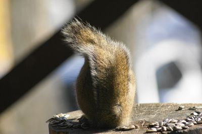 20140325squirrel1.jpg