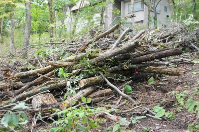 20120928woods.jpg