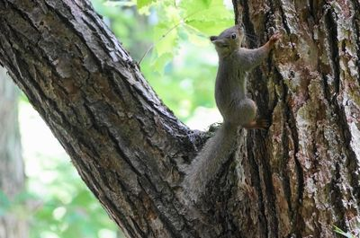 20150629squirrel.jpg