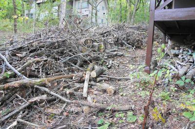 20121010woods1.jpg