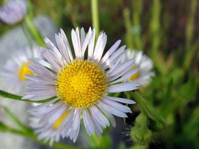 20090531flower.jpg