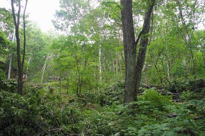20120725woods3.jpg