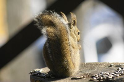 20140325squirrel2.jpg