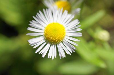 20120926flower1.jpg