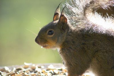 20120523squirrel.jpg