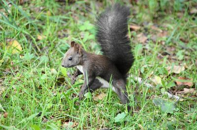 20110920squirrel.jpg