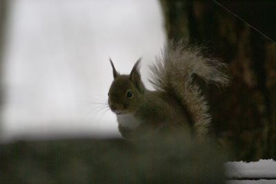 20120227squirrel.jpg