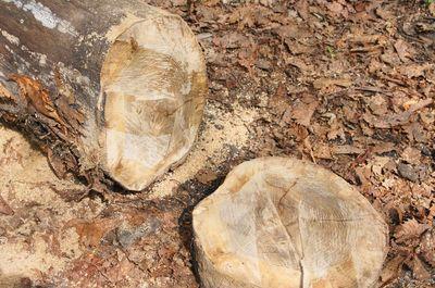 20120522woods.jpg
