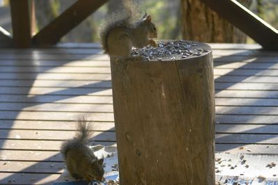 20120522squirrel2.jpg