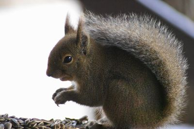 20111225squirrel.jpg