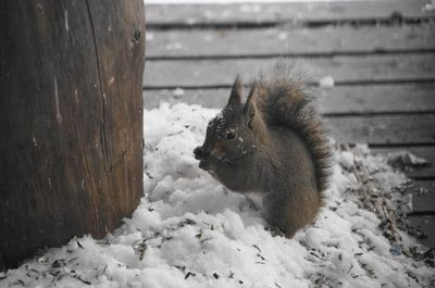 20141224squirrel2.jpg