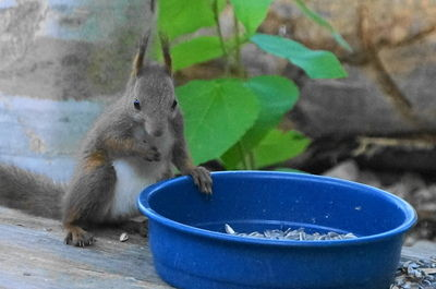 20160703squirrel1.JPG