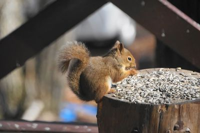20151029squirrel.jpg
