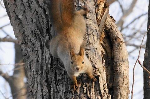 20180323squirrel