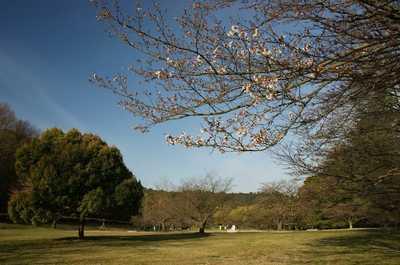 20090328jyoukouji.jpg