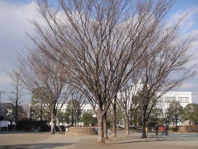 20100123park.JPG