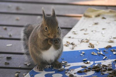 20111218squirrel.jpg