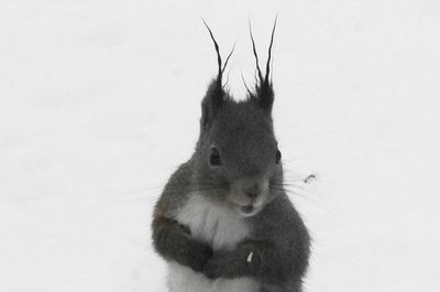 20160221squirrel3.JPG
