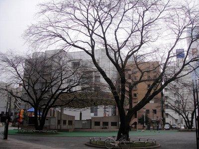 20110301atsugi2.jpg