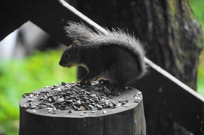 20150828squirrel.jpg