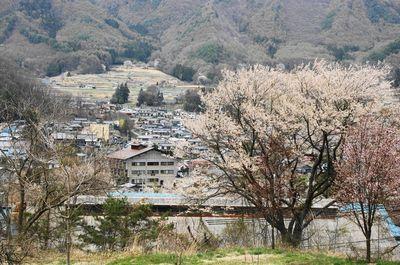 20110430sakura1.jpg