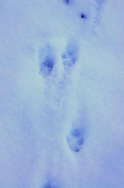 20111118footprint.jpg