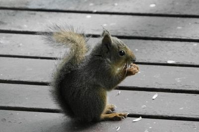 20150627squirrel1.jpg