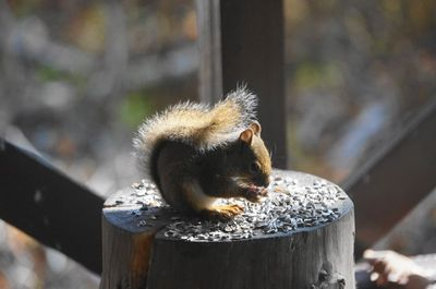 20151021squirrel.jpg