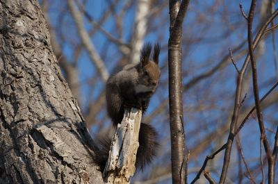 20160228squirrel.jpg