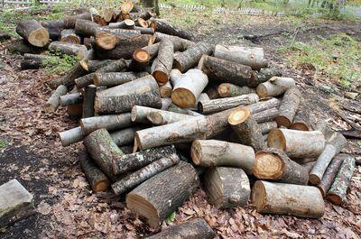20110527woods.jpg