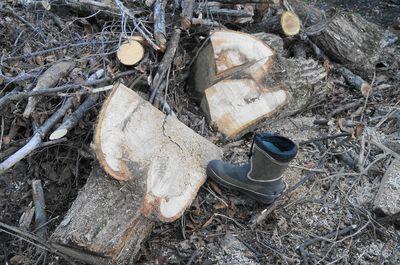 20130523woods1.jpg