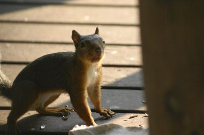 20130731squirrel.jpg