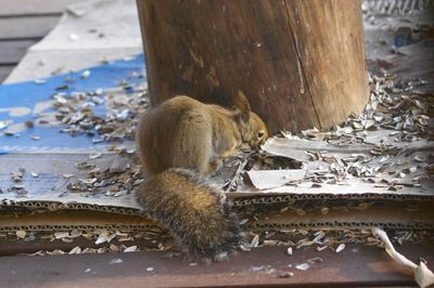 20140221squirrel2.jpg