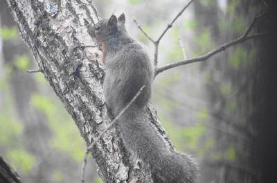 20120520squirrel.jpg