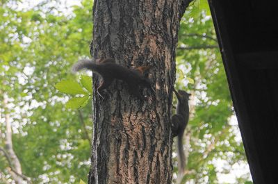 20140621squirrel2.jpg