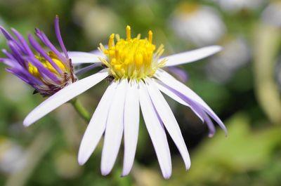 20120926flower.jpg