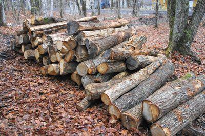 20120423woods.jpg