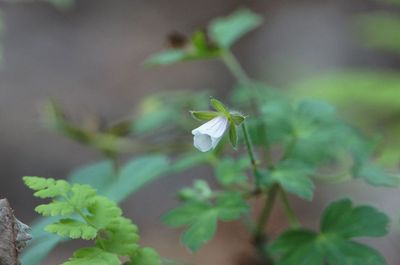 20120824flower2.jpg