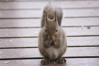 20120325squirrel1.jpg