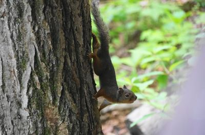 20140622squirrel1.jpg