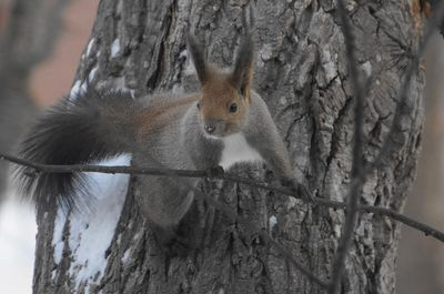 20151227squirrel1.jpg