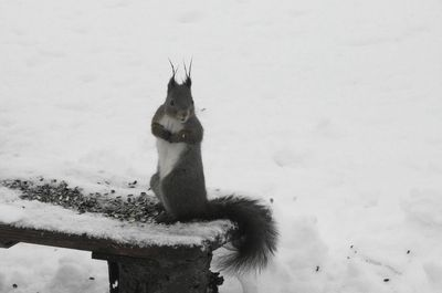 20160221squirrel1.jpg